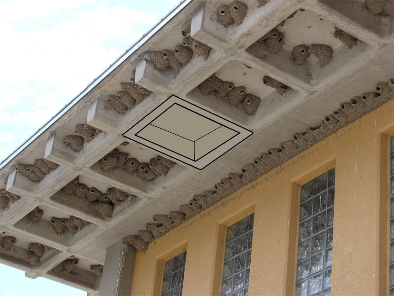 Barn Swallow Birdhouse Plans