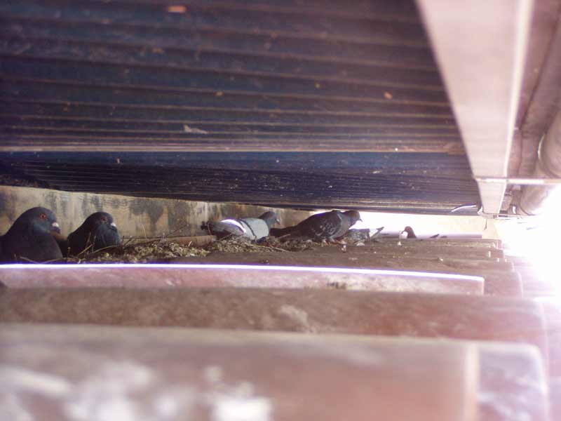 Pigeon Control Gallery 8 Solar Panel Pigeon Removal And