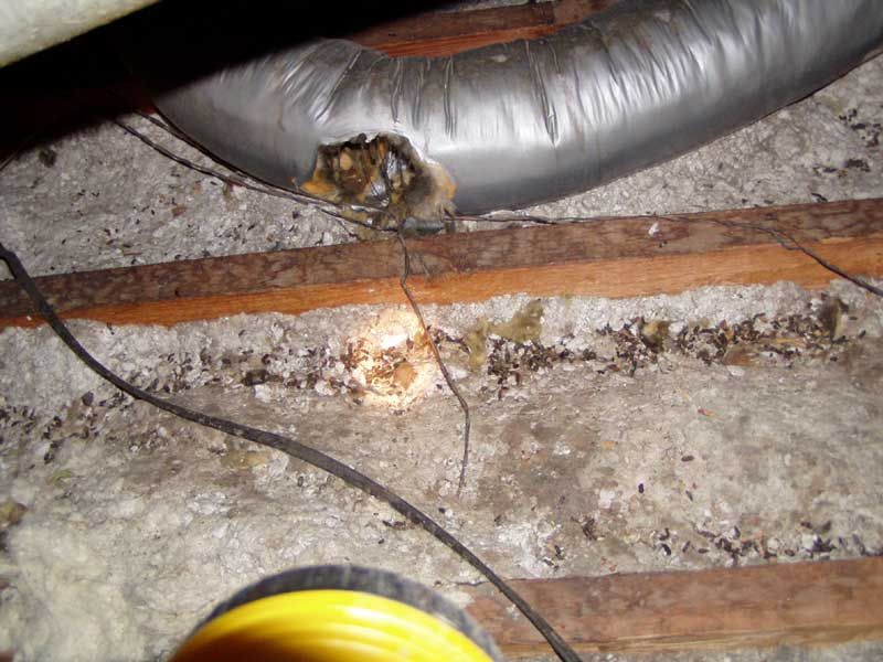 Rat Infestation Fixing Other Pest Control Company S Misakes